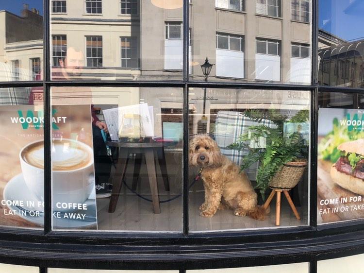 Dog Friendly all day, every day! - WoodKraft Cheltenham